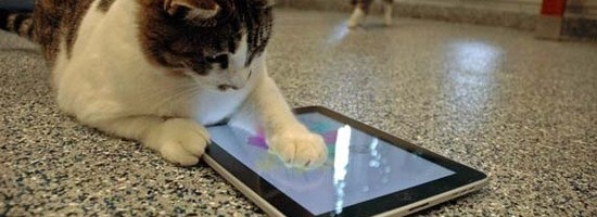 cat using ipad